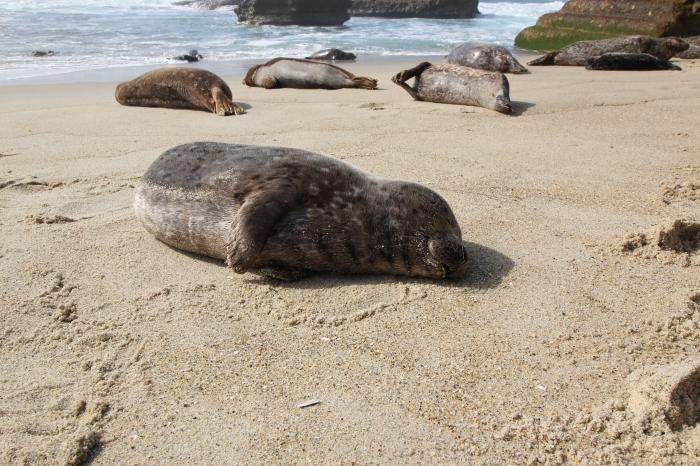 La Jolla Seals 1 3-1-16