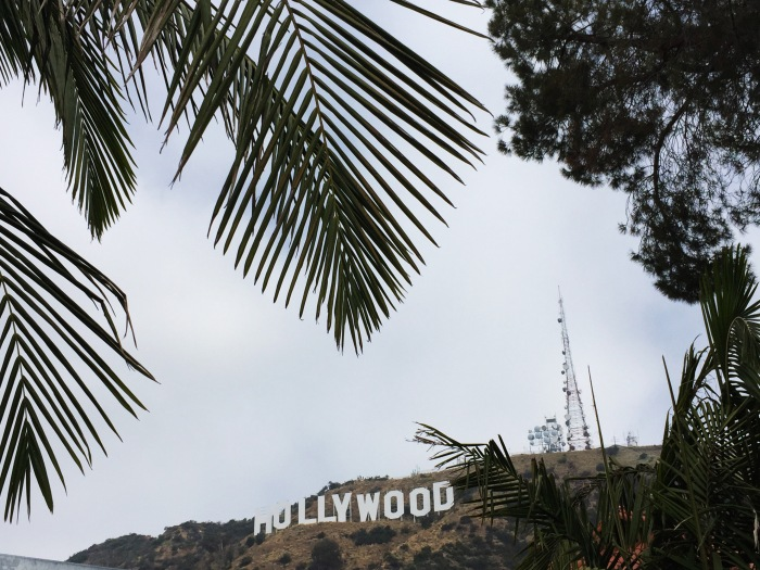 Palm Trees and Hollywood Sign