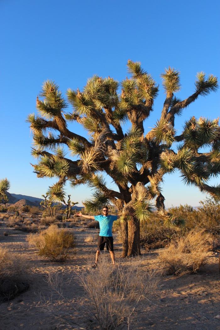 25-david-plus-joshua-tree