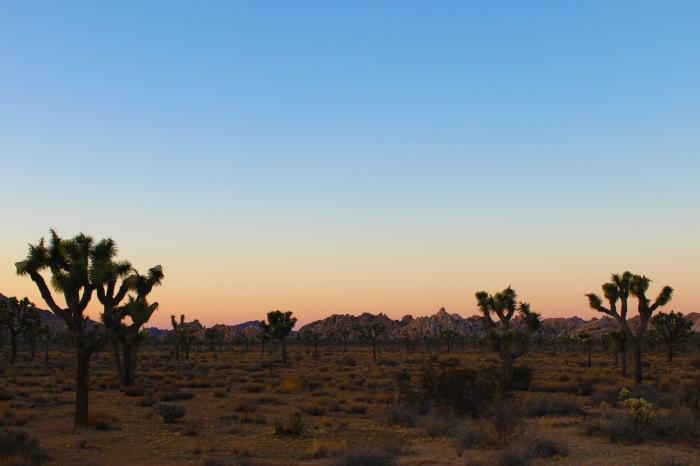 28-joshua-tree-sunset