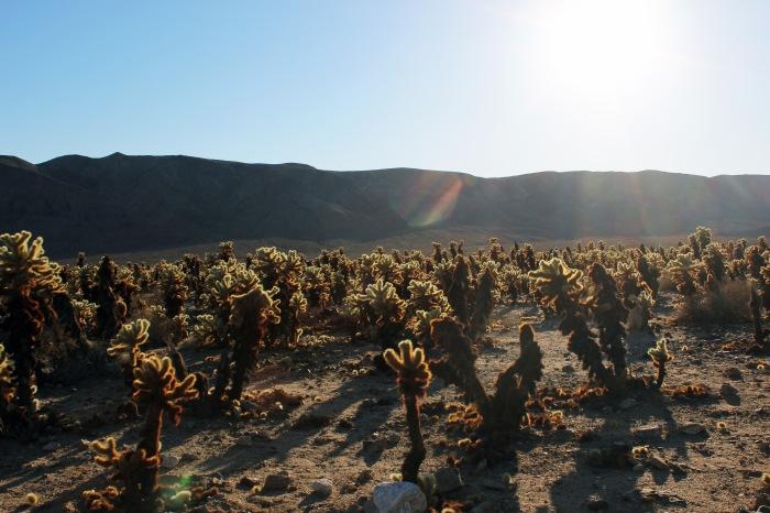 7-joshua-tree-cactus