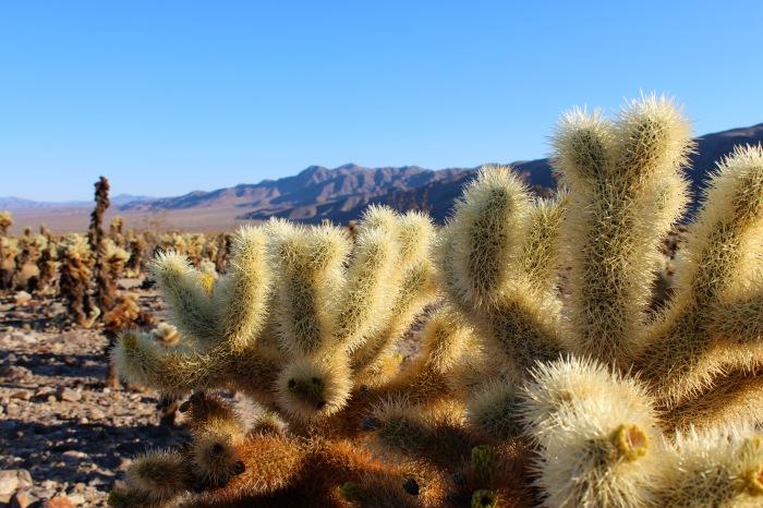 9-cactus-at-johusa-tree