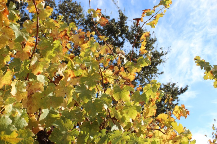 central-coast-fall