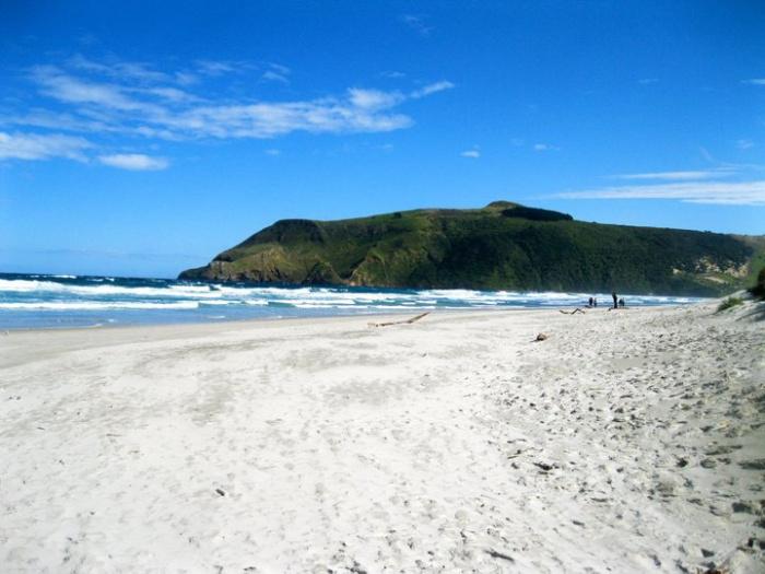 allans-beach-new-zealand