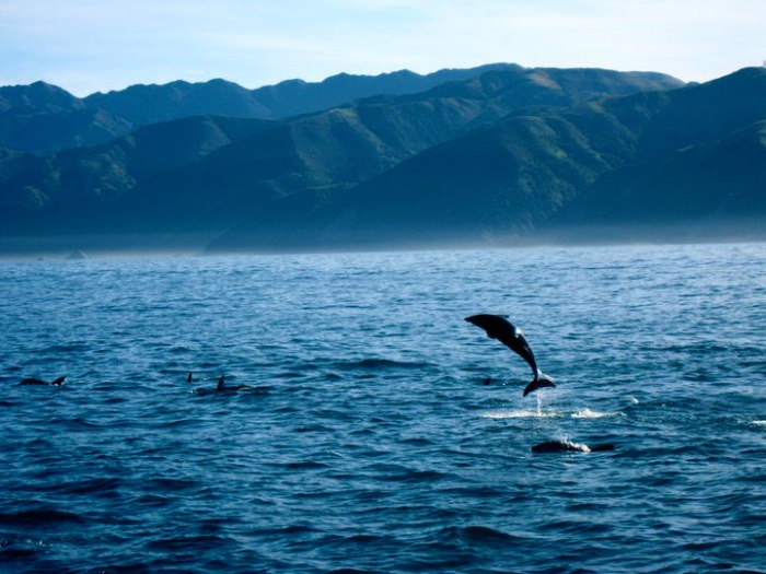 kaioura-new-zealand-dolphin-and-whale-watching