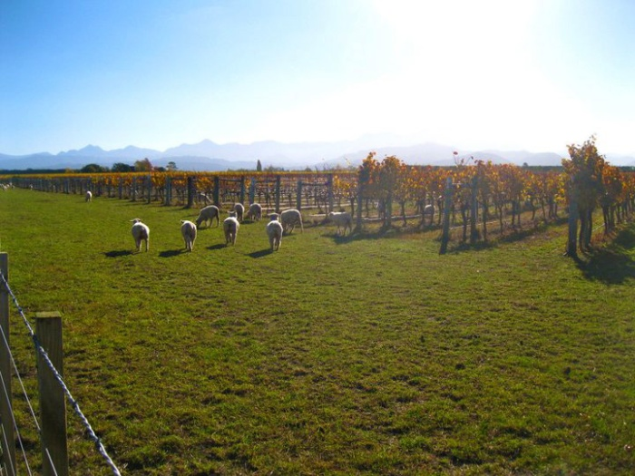 vineyard-visitors-nelson-new-zealand